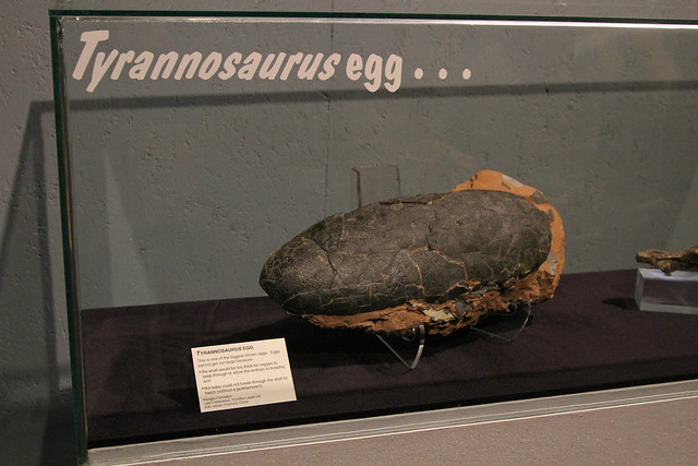 Tryannosaurus Egg