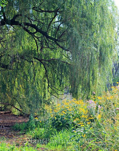 near pond