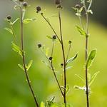 Növény és háttér 2