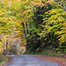 autumn country road by Alida's Photos