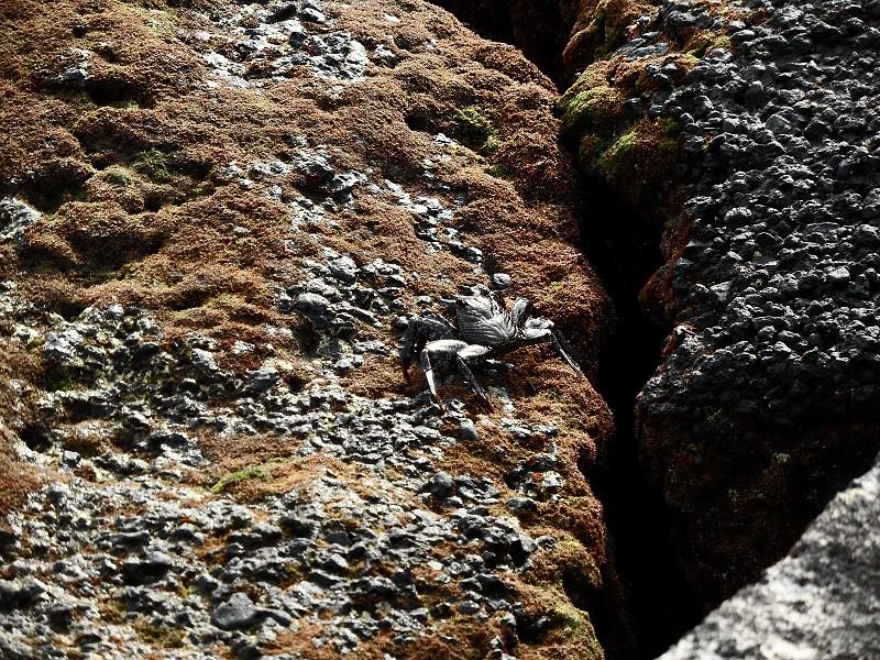 Vacaciones Guela. La Palma. 73 fotos 15486162771_d71e454c81_b