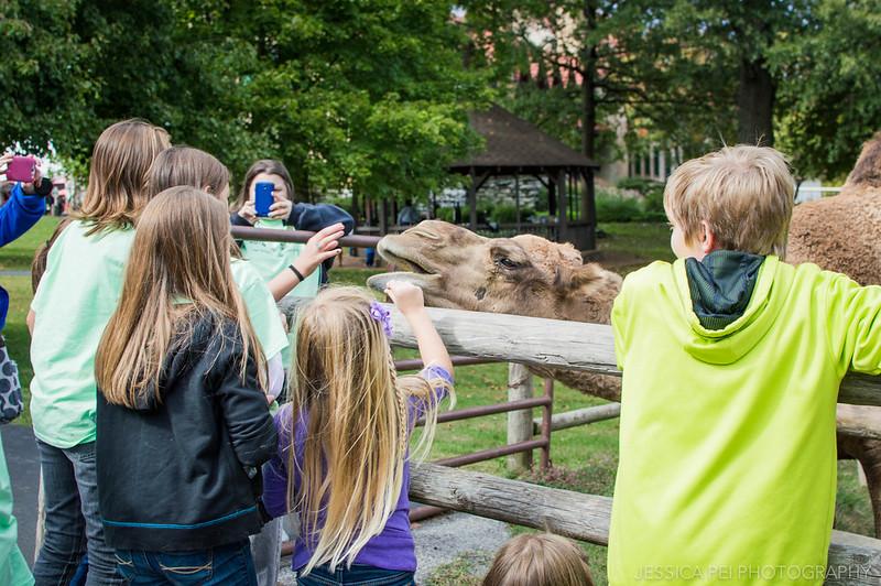 camel feed grant's farm