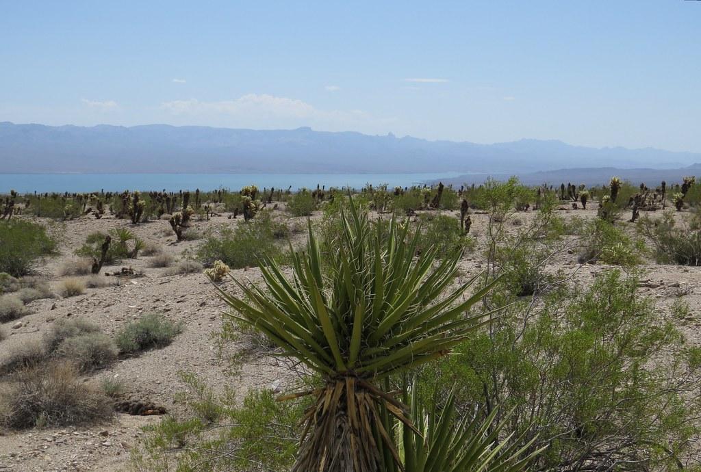 Mojave Desert  near  Mohave Lake,  Nevada