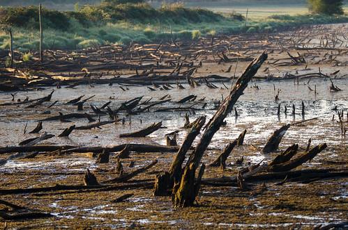 morning travel trees summer landscape washington nikon branches sigma drought wa wildliferefuge ridgefield ridgefieldnationalwildliferefuge d7000 nikond7000 120400mmf4556afapodgoshsm