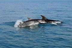 Dolphin Survey trip Apr 7th 2017