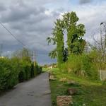 Ich hab da einen von Gestern noch. #b2w #nofilter  Die dunklen Wolken blieben nur eine Drohung. Den Baum in grün nehme ich als Versprechen.