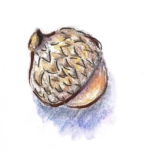 20141023_acorn1