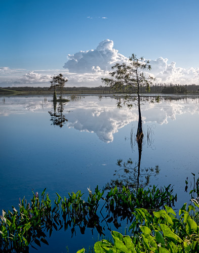 blue sky panorama usa cloud white lake plant reflection tree green reed water landscape orlando florida cloudy calm clear cypress centralflorida orlandowetlandspark edrosack