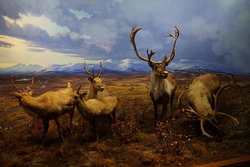 Museum of NaturalHistory (46)