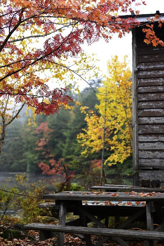 白駒池の紅葉