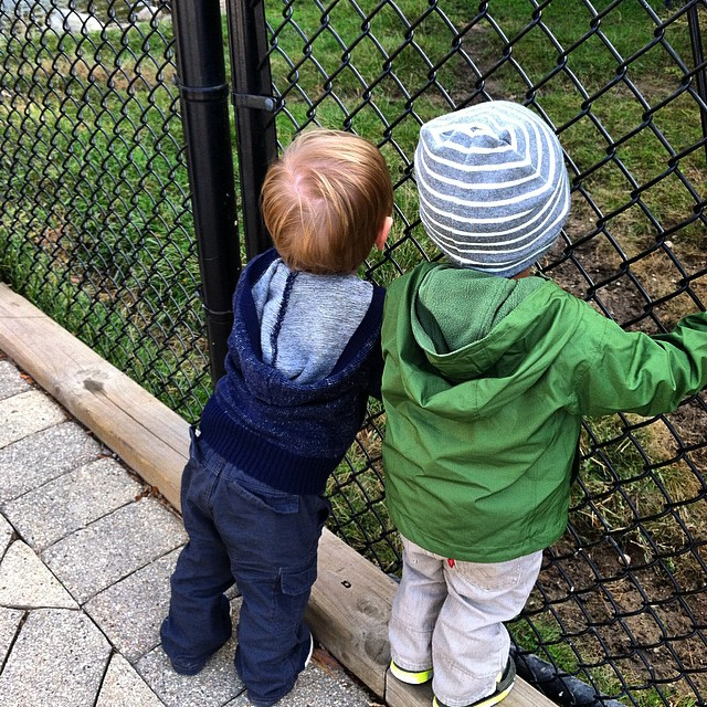 Buds exploring the suburbs zoo! #toddlergram #cosleyzoo #bestbuds #boyswillbeboys