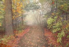 automne 14