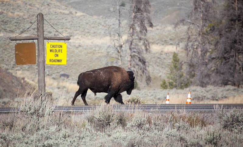 Wildlife On Roadway
