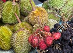 evergreen, rambutan, produce, fruit, durian,
