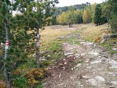 Übergang vom breiten Forstweg