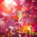 Autumn Light by Juste Pixx