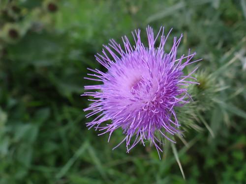 Steht man im Frühling unter einer Weide, dann hört man das summen der Bienen, die sommergrünen Sträucher haben ihren Höhepunkt im Frühling, wenn an Blume die Sonne strahlt0172