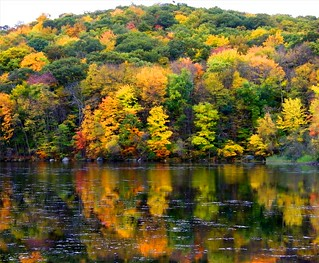 A Reflected Forest