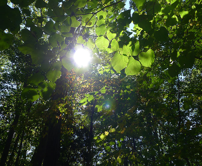 sunlight and green