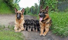 animal family011