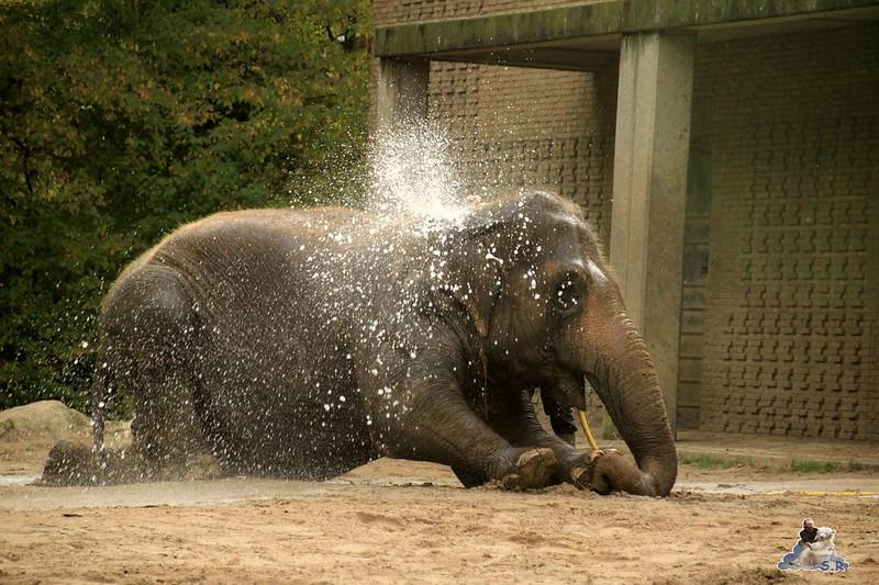 Berliner Zoo 91