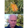 An Australian native flower - Grevillea at Tea Gardens #frontback @frontbackapp