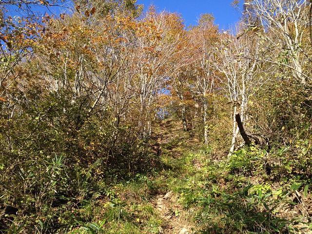 大日ヶ岳 ひるがの高原ルート 登山道