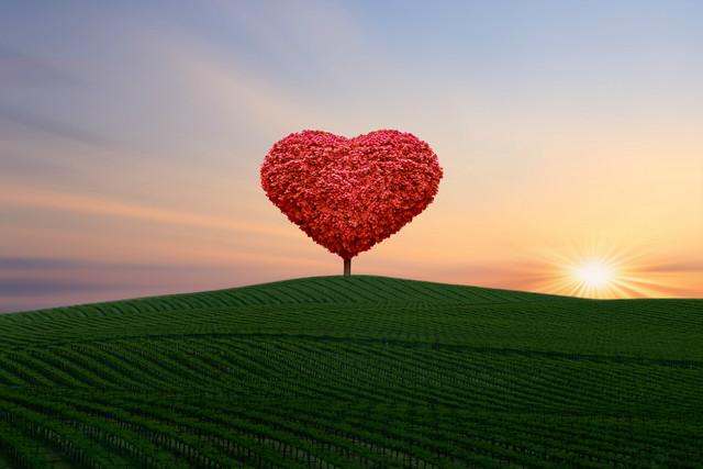 ~~Heavenxxx89 Art & Photography~~ - the little red tree