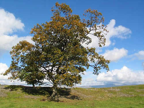 Autumn in Cumbria (42)