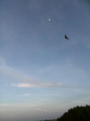 Kite, nueva diversión