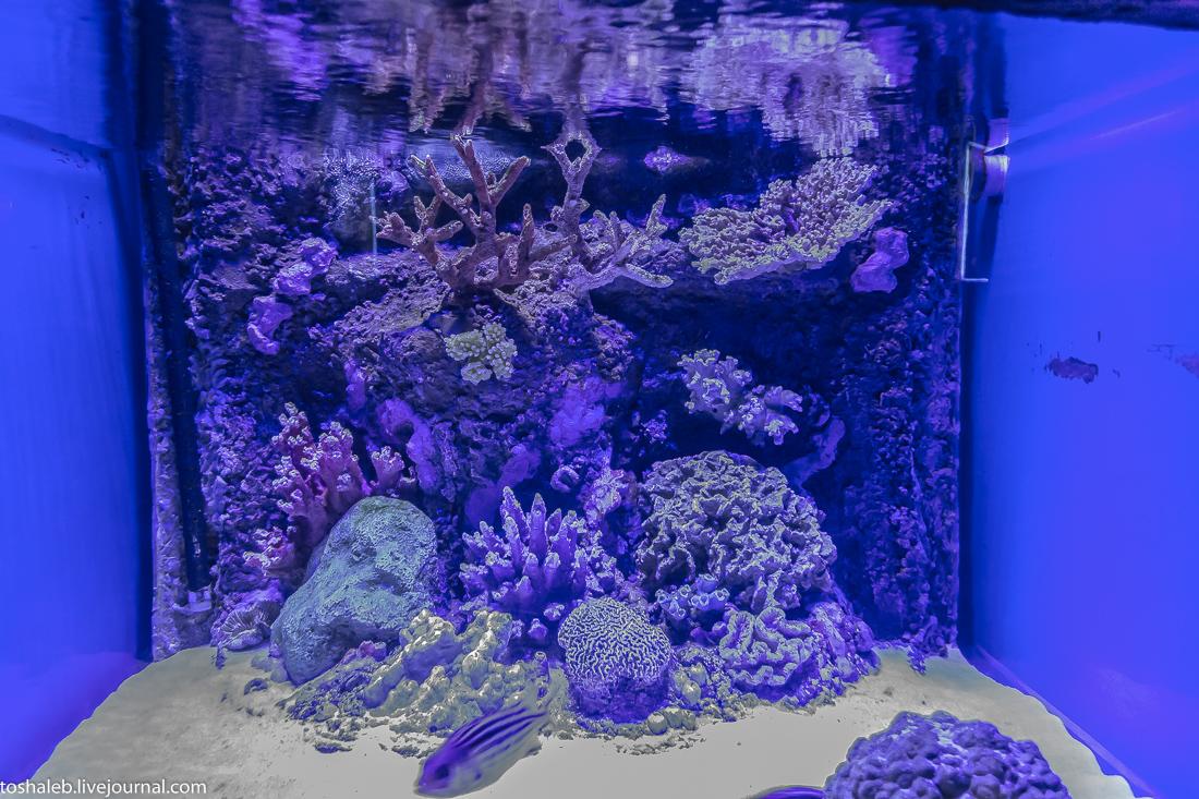 Анталья_аквариум-14