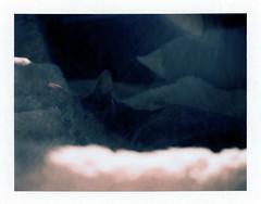 Kitty Glare & Lens Flare