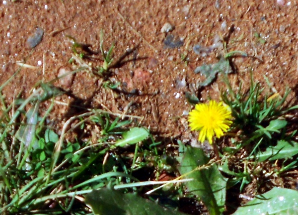 primavera, flor, amarela