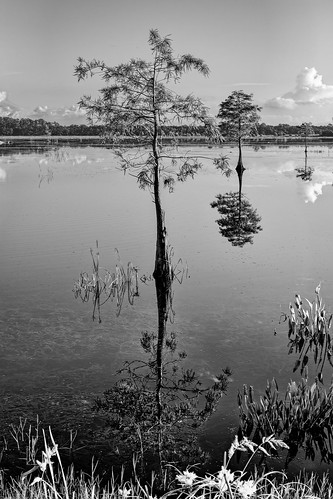 blue sky blackandwhite bw panorama usa cloud white lake plant reflection tree green reed water landscape orlando florida cloudy calm clear crop cypress centralflorida orlandowetlandspark edrosack