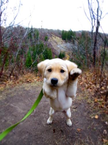 A Jill/Puck pup in Edmonton