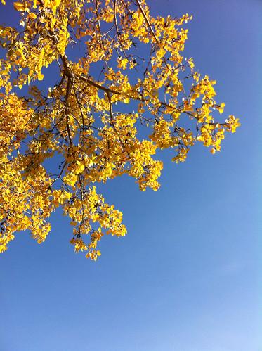 On An Autumn Morning (SOTC 124/365)
