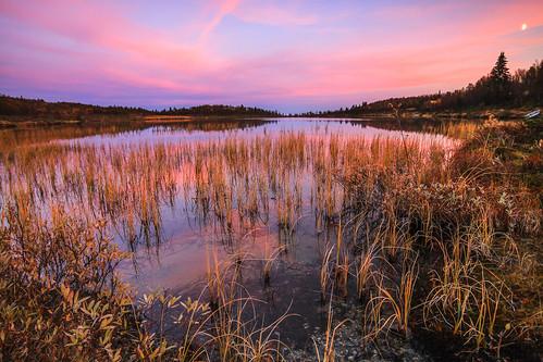 pink sunset moon lake fall forest reeds twilight pond skies straws buskerud såtefjell nedredjupetjønn
