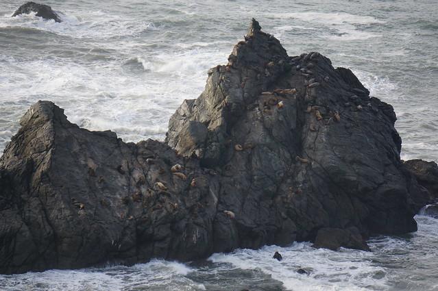 Sea lions north of Trinidad, CA