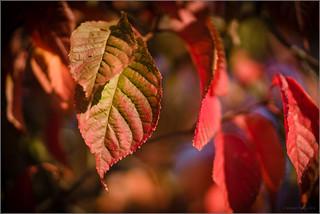 07 Leafy Colours