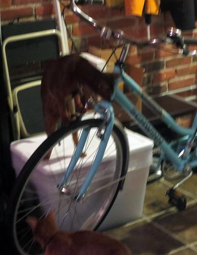 jakeangelbikeE_1704