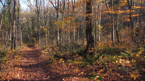 automne lac québec pleinair parcdelamauricie louuiss lequébecetsesparcsnationaux