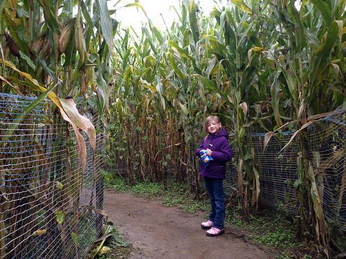 Verona Corn Maze
