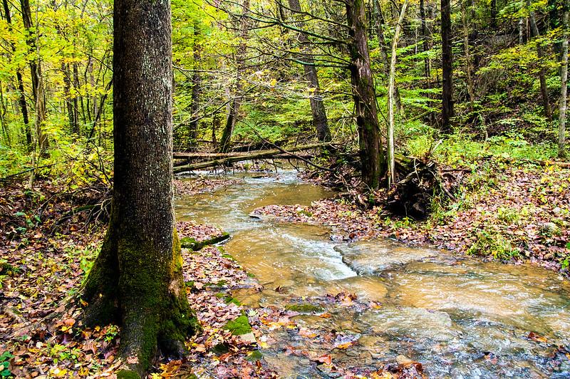 Twin Creek Valley & Henderson Park - October 11, 2014