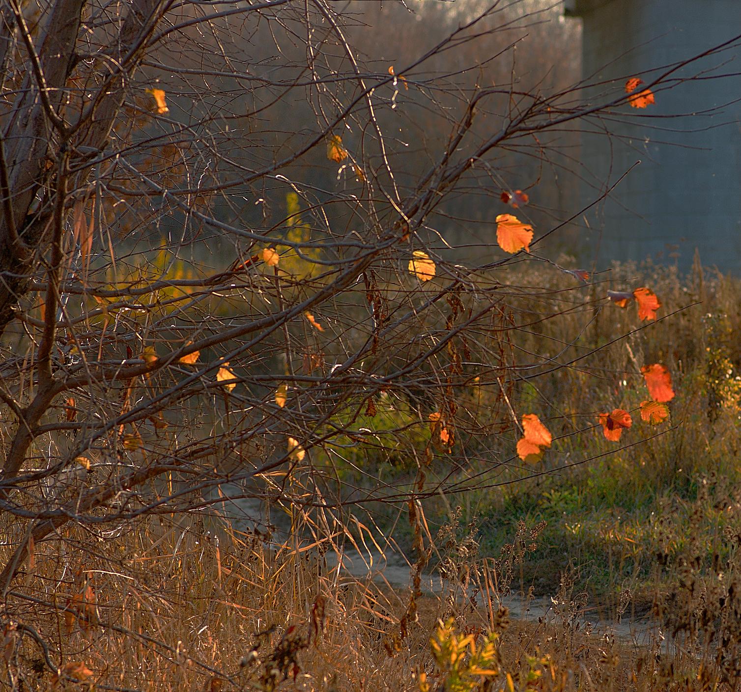 Картинки плохой погоды осенью, юбилей лет папе