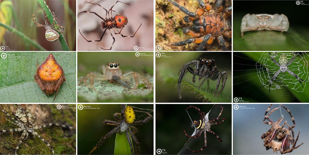 Wildlife Malaysia- Spiders!