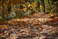 Delaware Water Gap in Fall