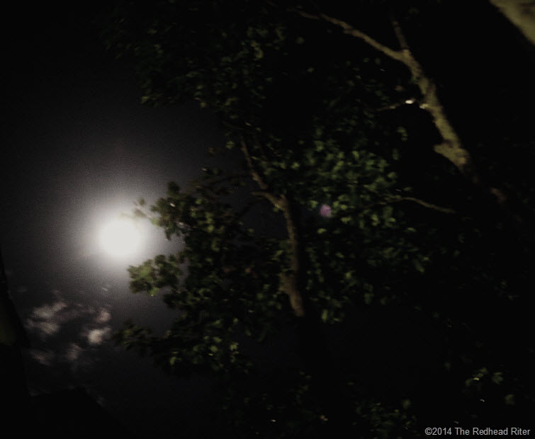 moon through the trees in the darkness  thumb (1)