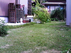 Your IP Camera detected motion;here is a snapshot