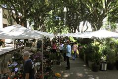 Feira de Flores e Plantas Naturais encanta frequentadores