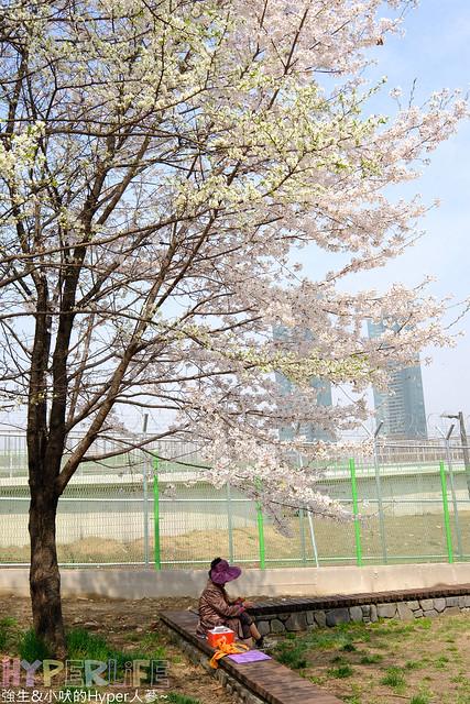 首爾林seoul forest (24)